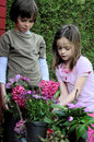 Siblings planting flowers working in the garden and plant pink Stock Images