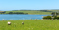Siblyback lake liskeard bodmin moor cornwall england uk near where people enjoy sailing and water sports Royalty Free Stock Photo