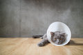 Sick cat with funnel cone collar prevent him scratch his ear Royalty Free Stock Photo
