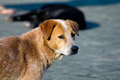 Sick dog brown and white standing alone on the floor Royalty Free Stock Photo