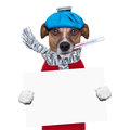 Sick dog with fever holding a blank banner Royalty Free Stock Photo