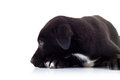 Side view of a lonely little black puppy dog Stock Photos