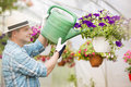 Side view of middle-aged man watering flower plants in greenhouse Royalty Free Stock Photo