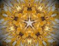 5 sided star abstract extrude mandala