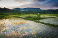 Sidemen bali new rice is planted in a flooded field the beautiful sunrise is reflected in the water has some of the most beautiful Royalty Free Stock Photo