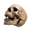 Sidetview human skull open mouth isolated Royalty Free Stock Photo