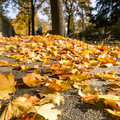Sidewalk foliage autumn Royalty Free Stock Image