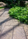 Sidewalk in the glasshouse along foot fern trees Royalty Free Stock Images
