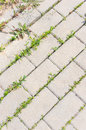 Sidewalk and vegetation green between stone pavement blocks Stock Photo