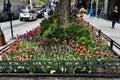 SidewalkTulip Garden  1 Royalty Free Stock Photo