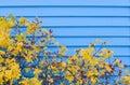Siding осени голубой Стоковая Фотография RF