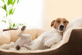 Siesta dog Royalty Free Stock Photo