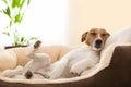 Siesta dog Royalty Free Stock Photo