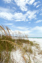 Siesta key florida beach is located on the gulf coast of sarasota with powdery sand shallow depth of field with focus on the Royalty Free Stock Images