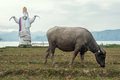 Sigale gale and dirty buffalo photos of a giant puppet stand up straight on the edge of lake toba north sumatera behind them is a Stock Photography