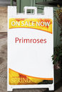Sign advertising primroses sale nursery willamette valley oregon Stock Photos