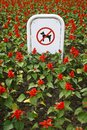 Sign prohibiting dog walking in a botanical garden no dogs sing in flowers Royalty Free Stock Photos