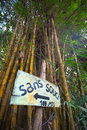 Sign stating no problem in french and bamboo with giant tree the background minca colombia Royalty Free Stock Image