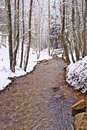 Snowy beech and pine forest in late winter, Sila National Park, Calabria, southern Italy Royalty Free Stock Photo