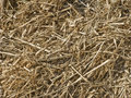 Silage background Royalty Free Stock Photo