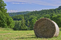 Silage in the meadow on a with trees background Stock Image