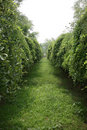 Silent green low tree lane Royalty Free Stock Photo