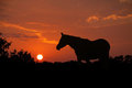 Silhouette Arabe noble de cheval contre le ciel de coucher du soleil Photo stock