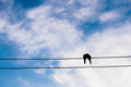the silhouette of the bird in love on power line or wire in blue