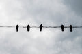 Silhouette Of Birds On Wire