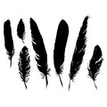 Silhouette black and white monochrome feather set isolated vector Royalty Free Stock Photo
