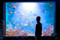 Silhouette of a boy in front of an aquarium Royalty Free Stock Photo