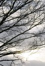 Silhouette branches winter without leaves against cloudy sky Royalty Free Stock Image