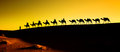 Silhouette of a camel caravan through the sand dunes in the sahara desert morocco Royalty Free Stock Photography