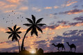 Silhouette of a camels and a man resting at palm trees against the evening sky Royalty Free Stock Photos