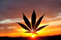 Silhouette of cannabis leaf at sunrise Royalty Free Stock Photo