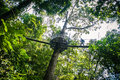 Silhouette on a canopy walk of man through the rainforest Royalty Free Stock Photo