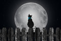 Silhouette of cat with full moon a on a fence in the moonlight Stock Photos