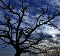 Silhouette of chestnut tree under intense sky of dawn Royalty Free Stock Photo