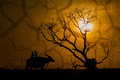 Silhouette of children on buffalo's back and dead tree Royalty Free Stock Photo