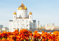 Silhouette of Christ the Savior Cathedral, Moscow, Russia Royalty Free Stock Photo