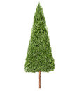 Silhouette of Christmas fir tree made of pine needles on a white background Royalty Free Stock Photo