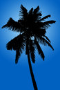 Silhouette of coconut palm isolated on blue background Royalty Free Stock Photo