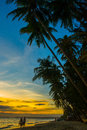 Silhouette Coconut Palm Tree Outdoors Concept.Vietnam, Mui Ne, Asia