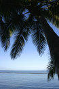 Silhouette of coconut palm trees at the beach Royalty Free Stock Images