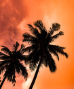 Silhouette of coconut palm trees on colorful sun set Royalty Free Stock Photo