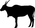 Silhouette of common eland taurotragus oryx Stock Photos