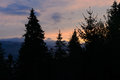 Silhouette of coniferous trees against a beautiful sunset in the Royalty Free Stock Photo
