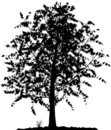Silhouette d'arbre. Photos stock