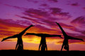 Silhouette dance handstands Royalty Free Stock Photo