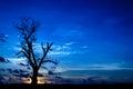 Silhouette dead tree on dark blue sky